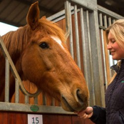Stable stress study a reminder that horses need social contact – charity