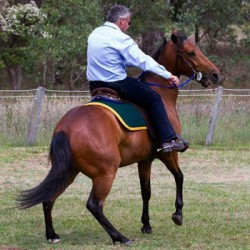Equine instinct and horses doing what's easiest