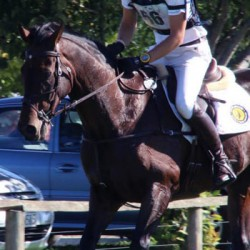 Leading NZ eventing horse fatally injured at NZ champs