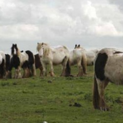 Lawmakers pass bill to tackle fly-grazing horses in England