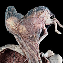 Eerie image of unborn foal wins photography award