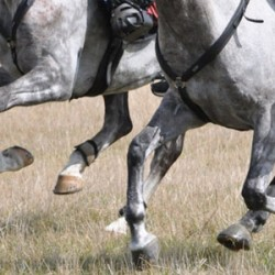 Qatari endurance rider banned and fined over positive drug test in mount