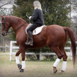 Winning with horses and the meaning of life – part 3