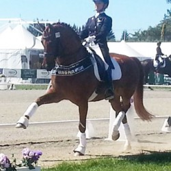 NZ Hoy: Dressage title and freestyle record to Vom Feinsten