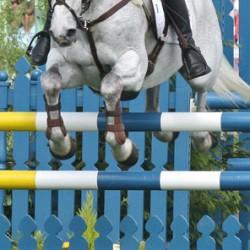 Showjumper suspended after horse tests positive for banned substances