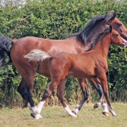Horse study: More radical weaning approach better in long term