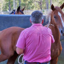 Some horses can't cope – help them out