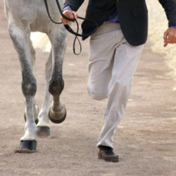 iPhone used to gather data on the gait of horses