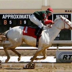 White colt flashes to second US race win
