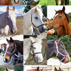 Get your vote in! 12 nominees for RDA Horse of the Year