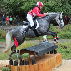 Do horses really enjoy jumping?