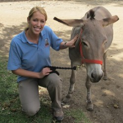 National award for equine charity worker