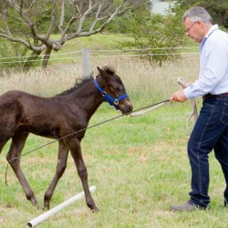 Switching on as a horseman – no half measures