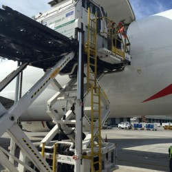 NZ horse shipper to start monthly UK-Aust flights