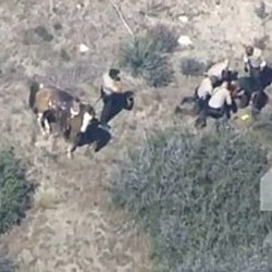 County to pay $US650,000 over arrest of suspect who fled on horseback