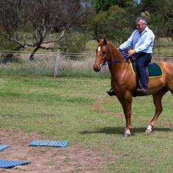 Do you reward your horse for doing the wrong thing?