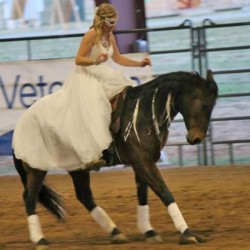 From wild horse to freestyle champ in 120 days