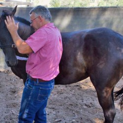 Horse training doesn't have to be complicated