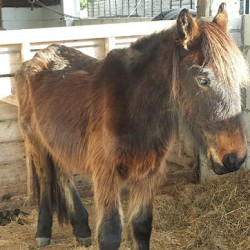"Rescued ponies named after ""Poldark"" characters"