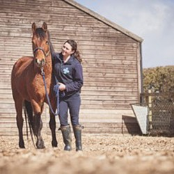 Troubled horses in need of special British homes