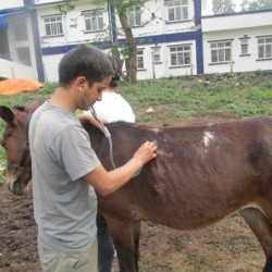 Quake-stricken working horses rescued in Nepal