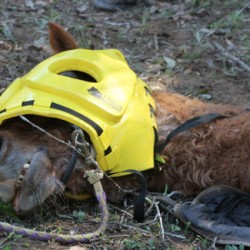 Call for standardised reporting in large-animal rescue cases