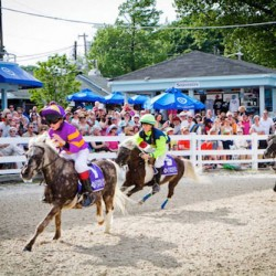 Tiny steeplechasing Shetlands hit the big time this weekend