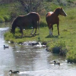 Can horses sort the oats from the quackery?