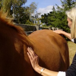 Equine massage: Hands on for the competitive edge