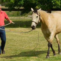 Where, how, and how fast? Three simples rules that horses live by