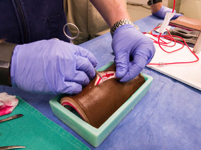 Artificial skin invented by equine surgeons is on the cutting edge
