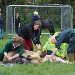 28 lads get the chop in British equine geld-fest