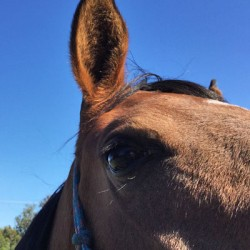 Laser surgery proves its worth in removing equine sarcoids