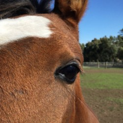 Man who suffered meningitis most likely caught infection from a horse
