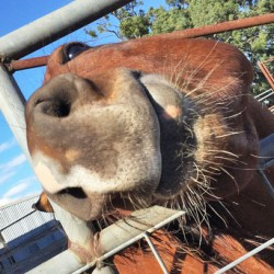 Licking ponies cause £1200 in damage to car's paintwork