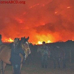 Fire forces relocation for South African equine therapy group