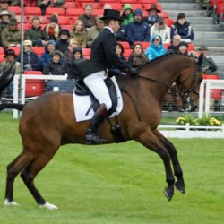 Nicholson's Badminton lead intact as Fox-Pitt challenges