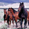 Authorities to deliver birth control drug to Utah wild horse herd by dart gun
