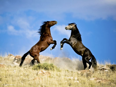 Photo exhibition to provide intimate portrayal of American mustangs
