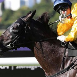 Kiwi mare takes long trip to visit Frankel