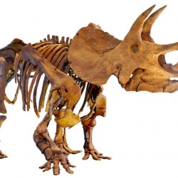Complex horse teeth outdone by those of a dinosaur, researchers reveal