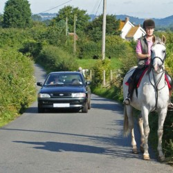 Driver alert: overtake horses on the road with care