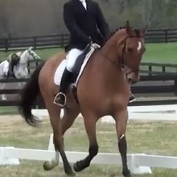 Horse aimed for PanAm Games dies after US cross-country