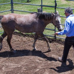 Forward thinking: The perils of going backwards in horse training