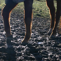 Wet, wet, wet: Equine health at risk when rain keeps falling