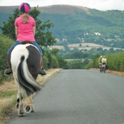 Piebald and skewbald horses have safety edge on road, researchers find