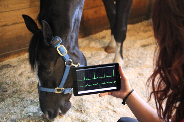 The SeeHorse wearable monitor allows owners to track their horse's health on a smart device.