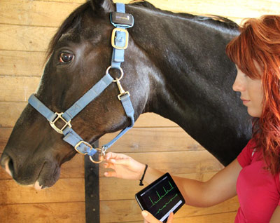 SeeHorse wearable collects a horse's vital signs and sends that information to a smart phone or other device.