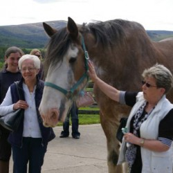 19+hh horse the new face of equine adoption scheme