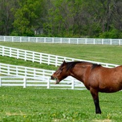 'Paint it black' order for Kentucky Horse Park's iconic white fences